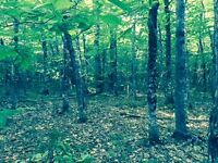 200 acres with hardwood and small camp