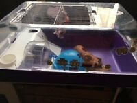 Free hamster cage with accesories