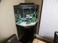 50 Gallon Pentagon fish tank + stand *reduced price*