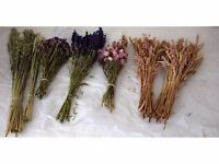 Dried flowers and grasses to make a great Christmas display