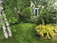 Yard Work, Landscaping,Lawn Mowing and Trimming and Cleanup