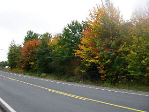 Vacant land on route 126 in Collette - Great price!!