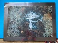 'Lightning Tree', Ivory Coast: large framed print from a photo by Yann Arthus-Bertrand