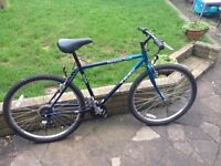 family of bikes for sale