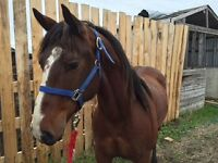 For Sale: Rope Horse
