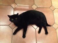 Lovely little black tom cat desperately seeking a home for life