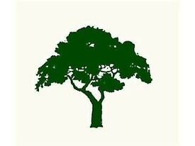 Friendly and Reliable Gardener and Tree Surgeon Brian McWiliams Garden Services