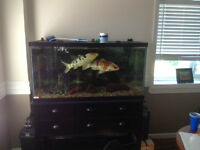 110 Gallon Tank and Stand  OFFERS!
