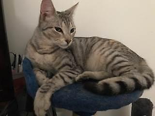 Little Paws Kitten Rescue - Ziah