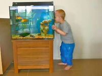Free fish tank for kid wanted
