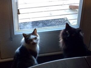 Father and son cats need a good home