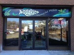 Aquarica - Tanks and Fish - Now open Sundays