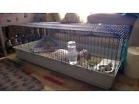 Ferplast 140 Large Indoor Rabbit/Guinea Pig Cage with accessories
