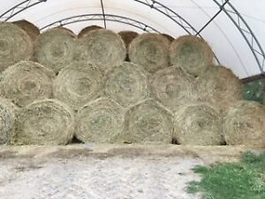 High Quality Hay For Sale