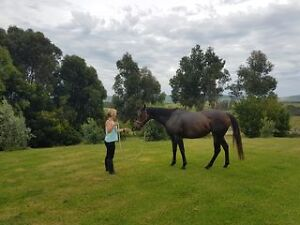 Potential Plus for Budding Trainer Leongatha South South Gippsland Preview