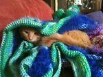 Cinnamon Kitty Treats