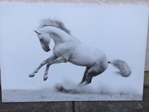 Majestic Horse Painting on Canvas