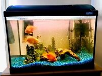 95 litre fish tank with 8 fish and extras (Includes Parrot fish, Shark, Clown loaches and more)