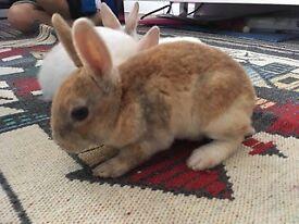 Baby rabbit ONLY 2 LEFT