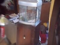CUBE AQUARIUM / FISH TANK AND STAND ** CLACTON CO15 6AJ
