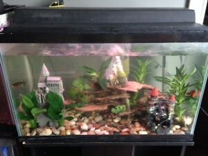 50 GALLON TANK WITH STAND & STORAGE CUPBOARDS & ACCESSORIES