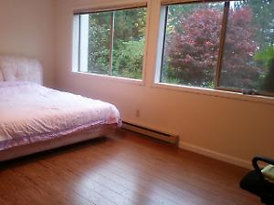 Bright suite for rent