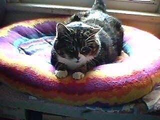 bongeecats-catnip