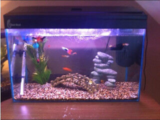 Clear seal fish tank 2ft