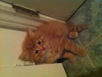 chaton a donner