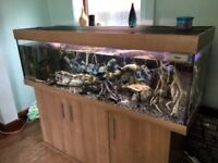 Eheim 5 foot mature fish tank, complete with fish