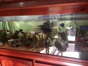 For Sale Aquarium Bull Creek Melville Area Preview
