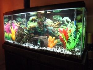 50 gallons fish tank with stand