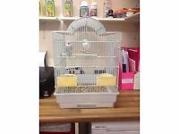 2 stunning budgies with cage and all accessories