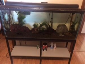 Fish tank 50 gallons stand filtration gravel feeder
