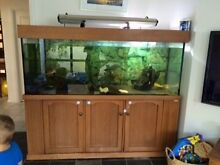 Extra Large Fish Tank Wembley Downs Stirling Area Preview