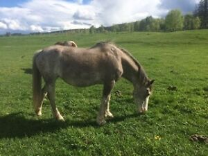 Horses for sale or trade