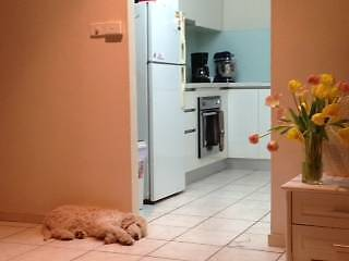 Lovely pet friendly house for rent in Anula, furnishings optional Burleigh Waters Gold Coast South Preview