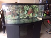 72 Gallon Bow Front Aquarium with stand