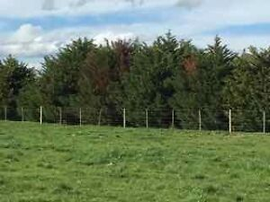 Agistment - Little River - Turn out paddock - A1 fencing Little River Outer Geelong Preview