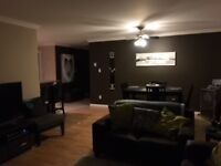 1,000 sq ft Whyte Ave condo - March 1st
