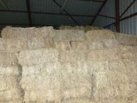 SQuare Hay Bales For Sale For Horses And Livestock