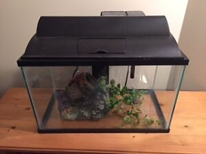Starter fish tank and accessories