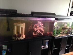 80 GALLON TANK WITH STAND, STORAGE CUPBOARDS & ALL ACCESSORIES
