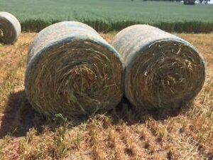 Hay oaten new season Malaga Swan Area Preview