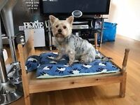 Four Poster Dog Bed