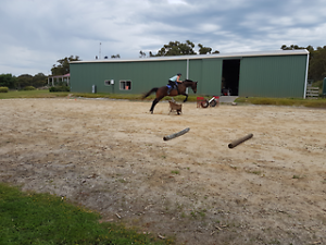 Opportunity to continue training great looking TB mare Leongatha South South Gippsland Preview