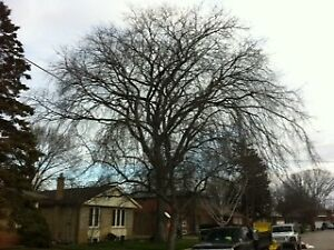 After The Ice Storm Tree Services by Evencut Tree Services
