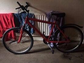 Mans adult bike