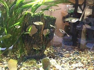 30l fish tank plus accessories