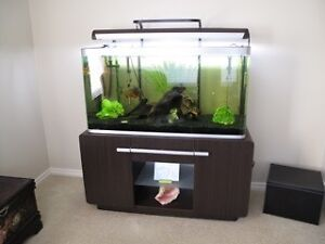 Open top style fish tank for sale